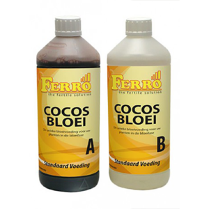 Cocos Bloei